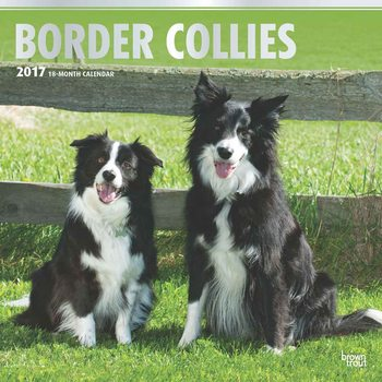 Calendar 2017 Border collie