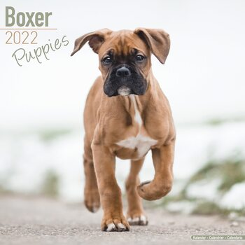 Calendar 2022 Boxer Pups