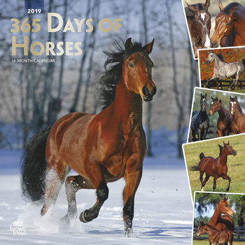 Calendar 2019  Caballos - 365 Days Of