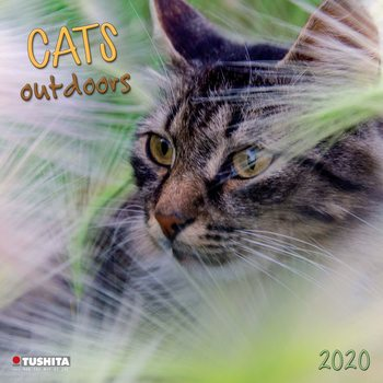 Calendar 2020 Cats Outdoors