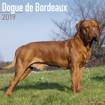 Calendar 2019  Dogue de Bordeaux