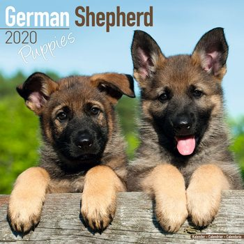 Calendar 2020 German Shepherd Puppies