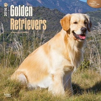 Calendar 2017 Golden retriever