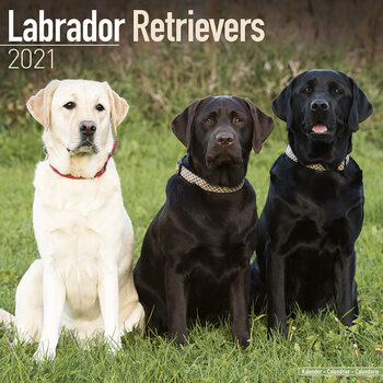 Calendar 2021 Labrador Ret (Mixed)