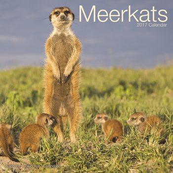 Calendar 2017 Meerkats