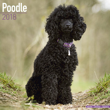 Calendar 2018 Poodle