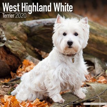 Calendar 2020  West Highland Terrier