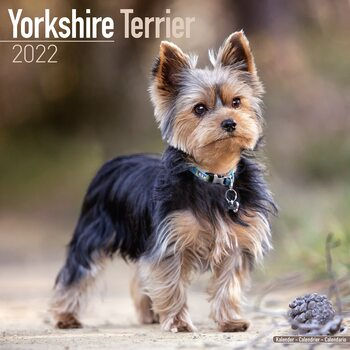 Calendar 2022 Yorkshire Terrier