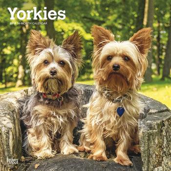 Calendar 2019  Yorkshire terrier - International Edition
