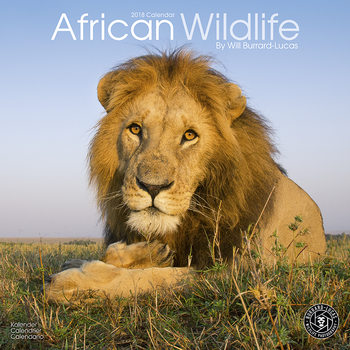 African Wildlife Calendrier 2018