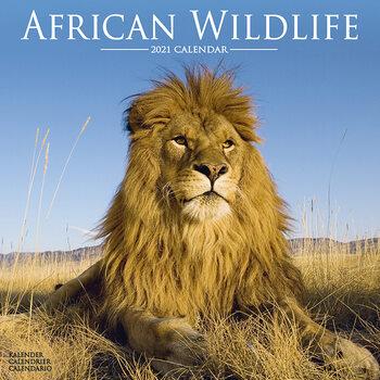 African Wildlife Calendrier 2021