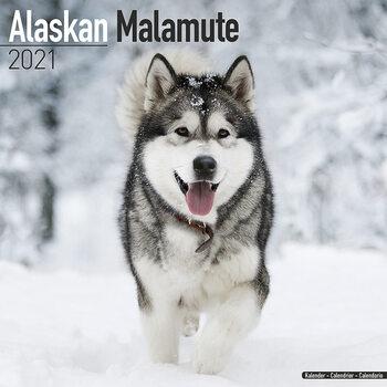 Alaskan Malamute Calendrier 2021