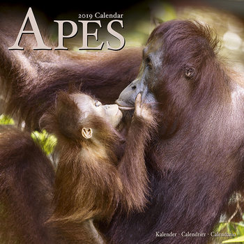 Apes Calendrier 2020