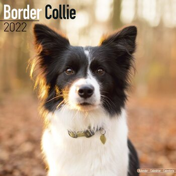 Border Collie Calendrier 2022