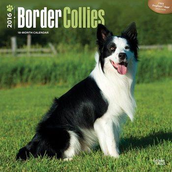 Border collie Calendrier 2017
