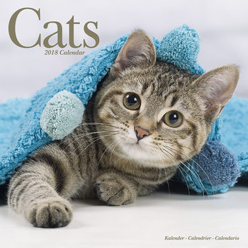 Cats Calendrier 2018