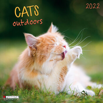 Cats Outdoors Calendrier 2022