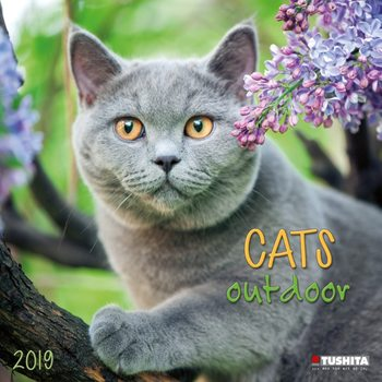 Cats Outdoors Calendrier 2019