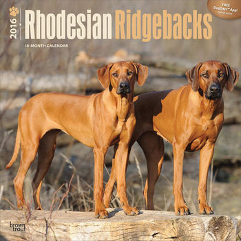 Chien de Rhodésie à crête dorsale Calendrier 2017