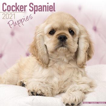 Cocker Spaniel Calendrier 2021