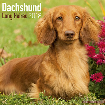 Dachshund (Longhaired) Calendrier 2018