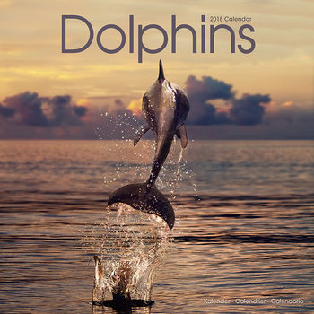 Dolphins Calendrier 2018