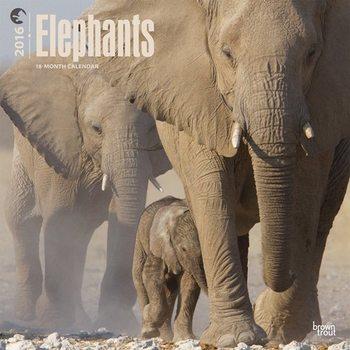Éléphant Calendrier 2017
