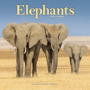 Elephants Calendrier 2019