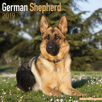 German Shepherd Calendrier 2019
