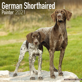 German ShortHair Pointer Calendrier 2021