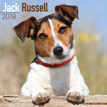 Jack Russell Calendrier 2018