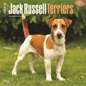 Jack Russell terrier Calendrier 2017