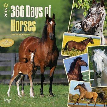 Le cheval 2 Calendrier 2017