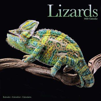 Lizards Calendrier 2020