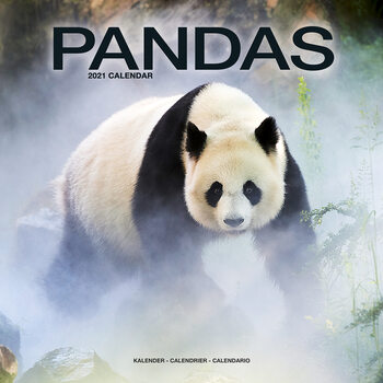Pandas Calendrier 2021