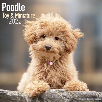 Poodle Calendrier 2022