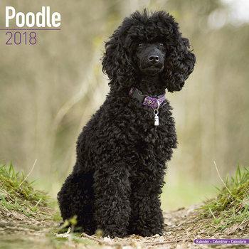 Poodle Calendrier 2018
