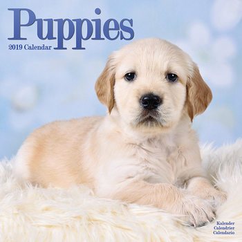 Puppies Calendrier 2019