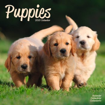 Puppies Calendrier 2020