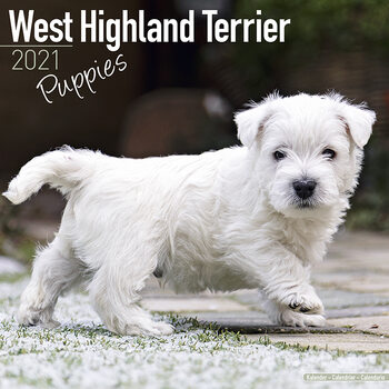West Highland Terrier Calendrier 2021