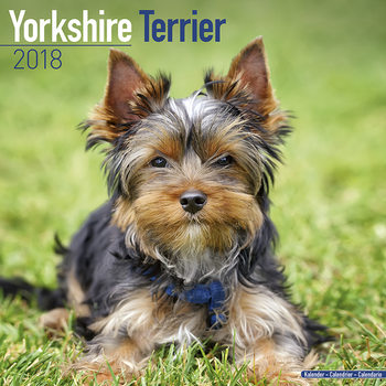 Yorkshire Terrier Calendrier 2018