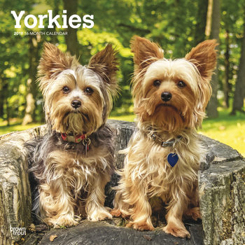 Yorkshire Terrier - International Edition Calendrier 2019