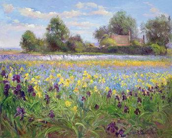 Obraz na plátne Farmstead and Iris Field, 1992