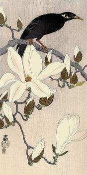 Ohara Koson - Myna on Magnolia Branch Canvas