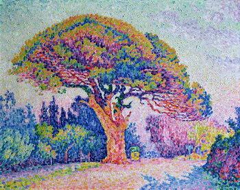 Obraz na plátne The Pine Tree at St. Tropez, 1909