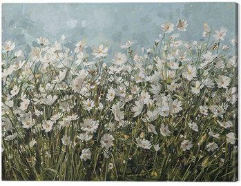 Anne-Marie Butlin - White Cosmos Canvas