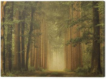 Obraz na plátne  Lars Van De Goor - The Portal