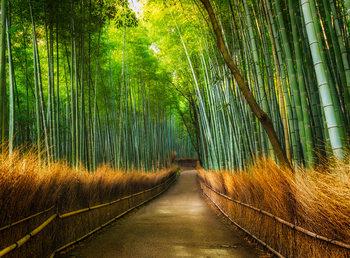 Carta da parati Bamboo - Path in the Forest