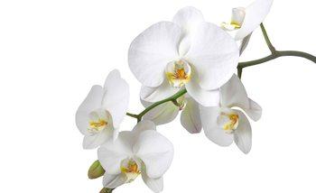 Carta da parati Fiori Orchidee Natura Bianco