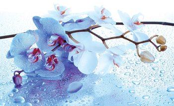 Carta da parati  Fiori Orchidee Natura Gocce